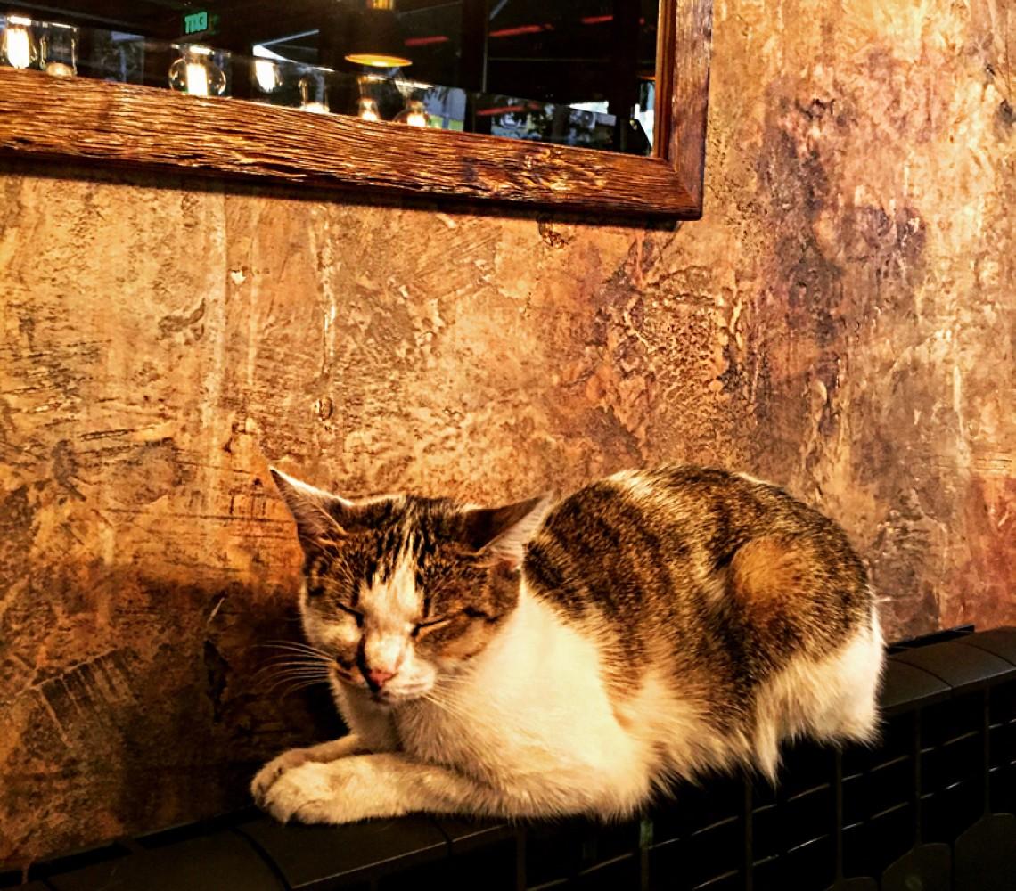 Mačak u zanosu meditacije