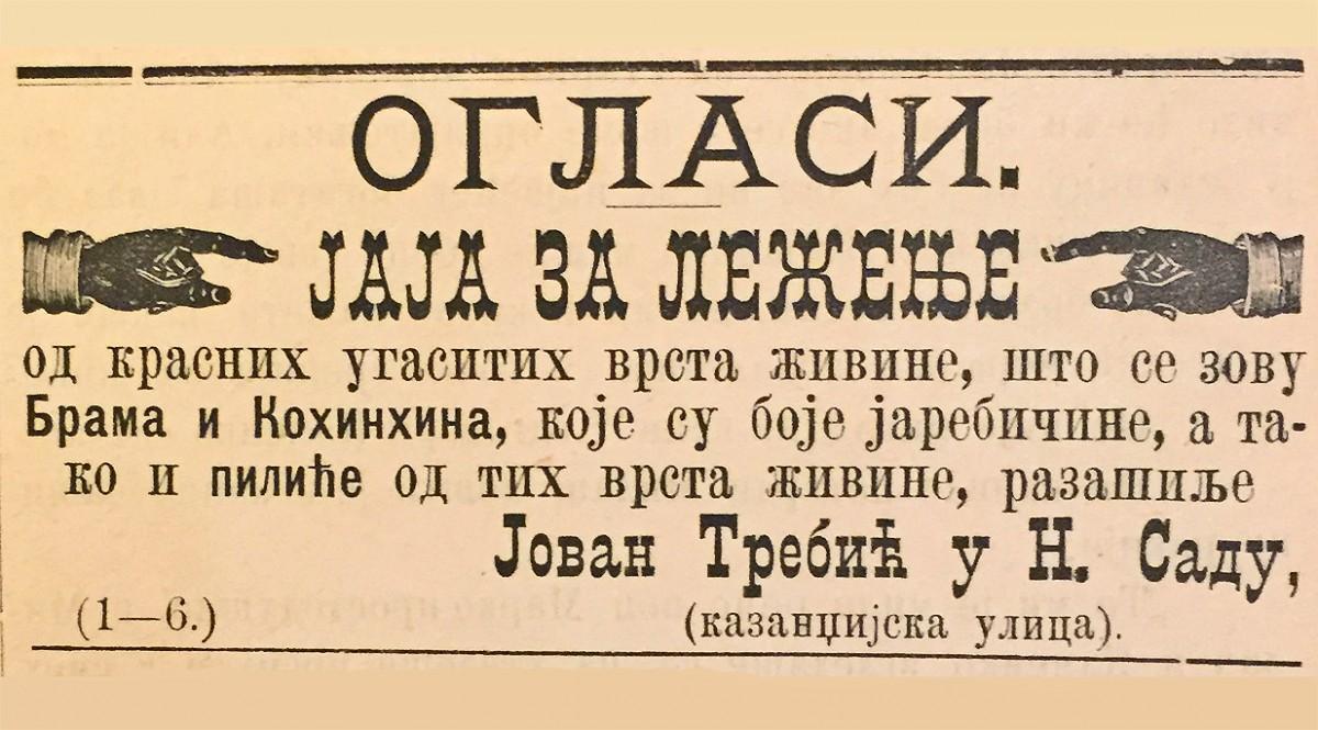Oglas iz 1882: Jaja za leženje, Jovan Trebić iz Novog Sada