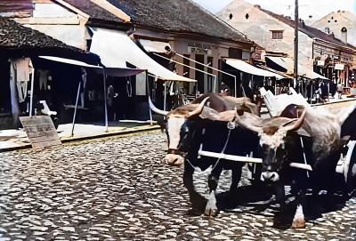 Volovska zaprega na beogradskim ulicama neposredno nakon Prvog svetskog rata